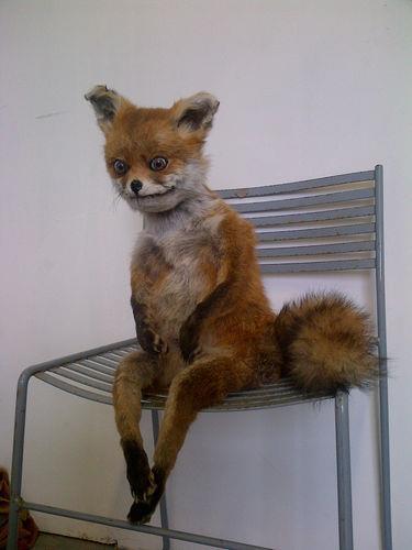 bad-taxidermy-fox.jpg